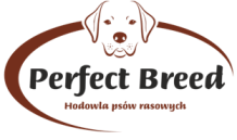 PERFECT BREED PL (English) – breeding of pedigree dogs